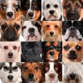 Четыре гена окраса собак