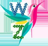 Пол птиц